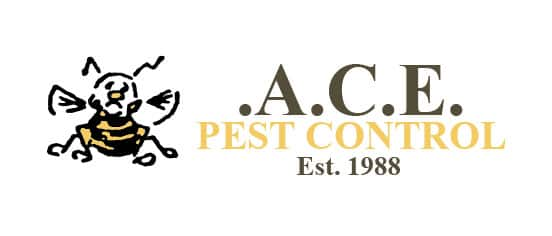 What Are The Most Common Pests in A Commercial Kitchen?